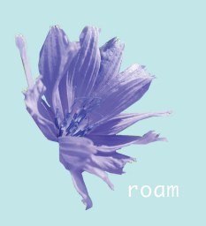 Purple corn flower on blue background with the word 'roam' on the bottom right